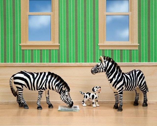 Wild Life By Jeff Friesen: Animals Meet Interiors