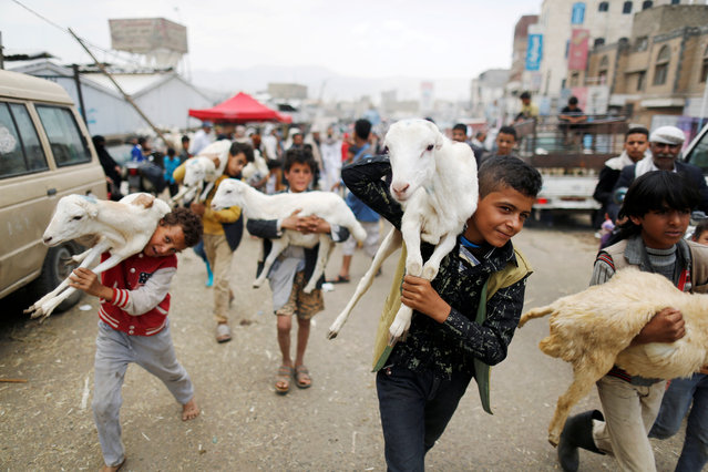 Boys carry goats at a livestock market where people buy sacrificial animals ahead of the Eid al-Adha celebrations in Sanaa, Yemen August 18, 2018. (Photo by Khaled Abdullah/Reuters)