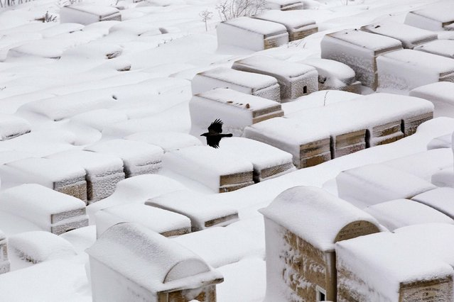 A crows flies over the snow-covered Mount of Olives cemetery outside Jerusalem's Old City February 20, 2015. (Photo by Ronen Zvulun/Reuters)