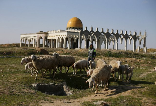 A Palestinian boy herds sheep in front of the ruins of Yasser Arafat International Airport, which was bombed by Israel in the past, in Rafah in the southern Gaza Strip February 5, 2016. Nabil Shurafa's travel agency in Gaza was once packed with clients booking flights to London, Paris, New York or cities across the Arab world. These days, he's lucky if anyone comes in, as so few people can get out. (Photo by Ibraheem Abu Mustafa/Reuters)