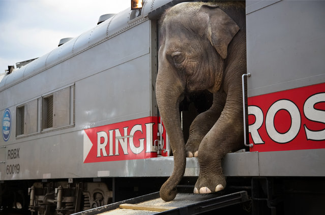 """Stephanie Sinclair, United States. Professional; Daily Life. """"The Ringling Bros and Barnum & Bailey circus is made up of people from 25 different countries, speaking everything from Russian to Arabic to Guarani. A few travel in cars and trailers, but a majority – 270 – live on the trains. Most come from multi-generation circus families, to the extent that collectively, the circus staff represents thousands of years of circus history"""". (Photo by Stephanie Sinclair/Sony World Photography Awards)"""