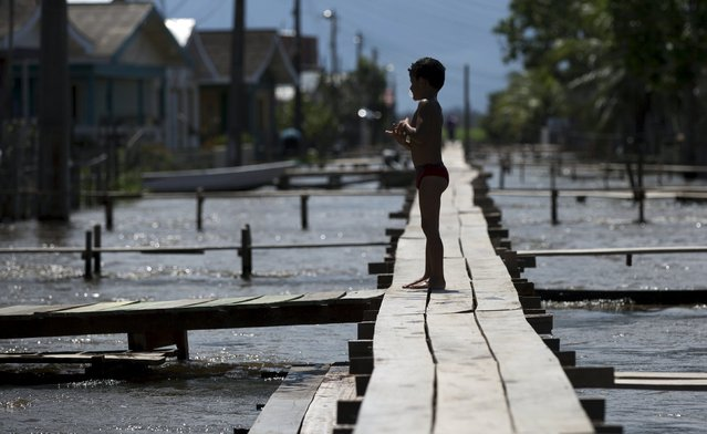 A boy is pictured on a makeshift walkway above a flooded street from the rising Rio Solimoes, one of the two main branches of the Amazon River, in Careiro da Varzea of Amazonas State, Brazil, June 30, 2015. (Photo by Bruno Kelly/Reuters)