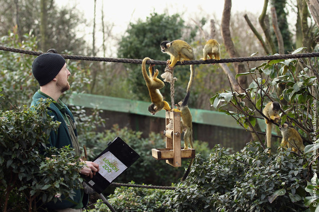 A zookeeper feeds Squirrel monkeys as he takes part in a photocall to promote London Zoo's annual stock take of animals