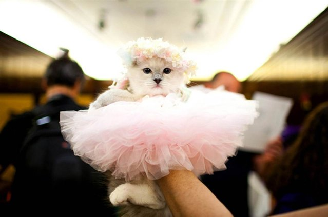 Cat Fashion Show at the Algonquin Hotel