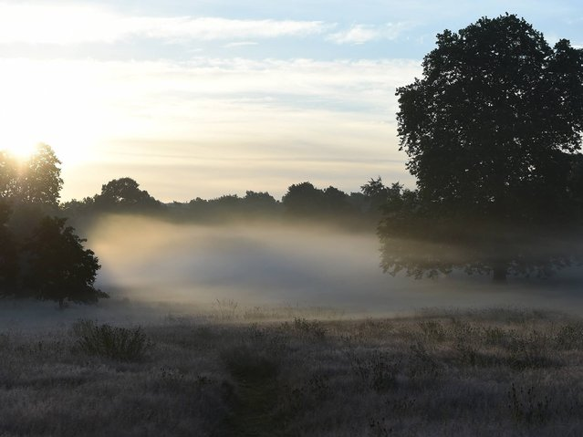 Early morning mist in Hyde Park in London, on Jule 8, 2014. (Photo by Jeremy Selwyn)