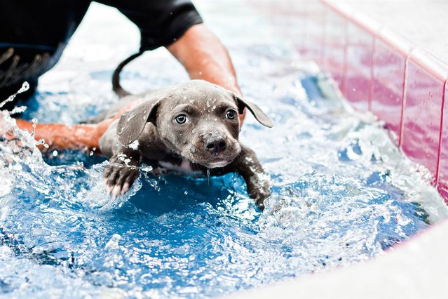 How swimming, and lots of love, saved Harper the puppy's life