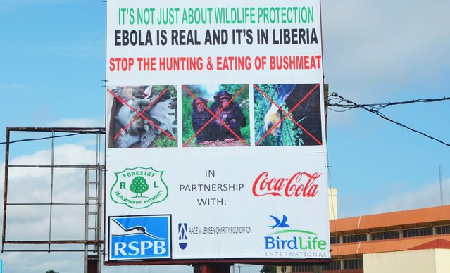 A picture taken on August 19, 2014 in Monrovia show an Ebola information billboard displayed near the John F. Kennedy memorial medical centre where 17 Ebola patients, who had fled an attack on their clinic, were transferred to. Their disappearance had raised fears of a nightmare scenario of people with the highly contagious disease wandering the city where unburied corpses have lain abandoned in the streets. (Photo by Zoom Dosso/AFP Photo)