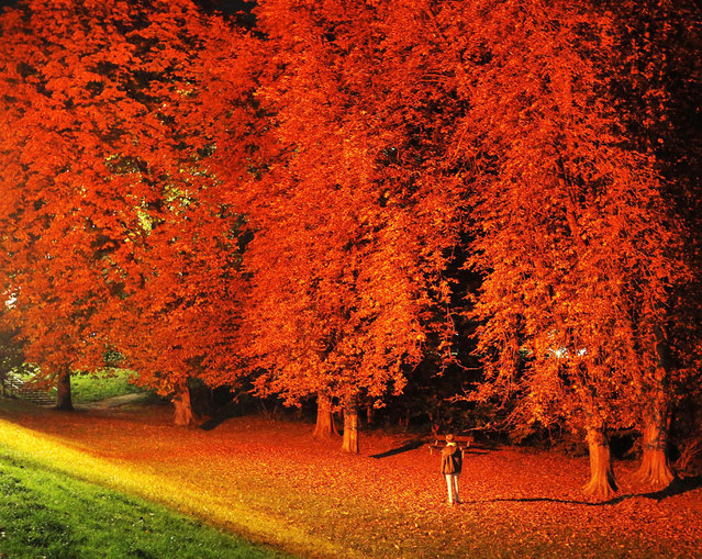 Trees in a park are illuminated with a red light as a part of an art project in Timmendorfer Strand, northern Germany Wednesday, October 26, 2016. (Photo by Michael Probst/AP Photo)