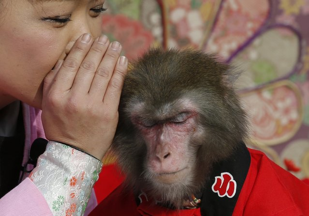 Ponta the monkey gestures to listen to a monkey trainer during their performance in Tokyo, Sunday, Jan. 4, 2015. (Photo by Shizuo Kambayashi/AP Photo)