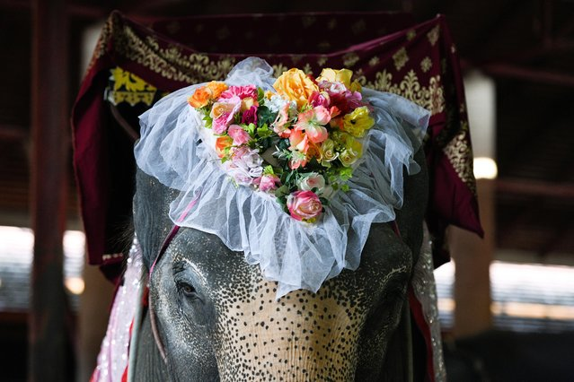 An elephant decorated with flowers in a heart shape is seen before a Valentine's Day celebration at the Nong Nooch Tropical Garden in Chonburi province, Thailand, February 14, 2021. (Photo by Chalinee Thirasupa/Reuters)
