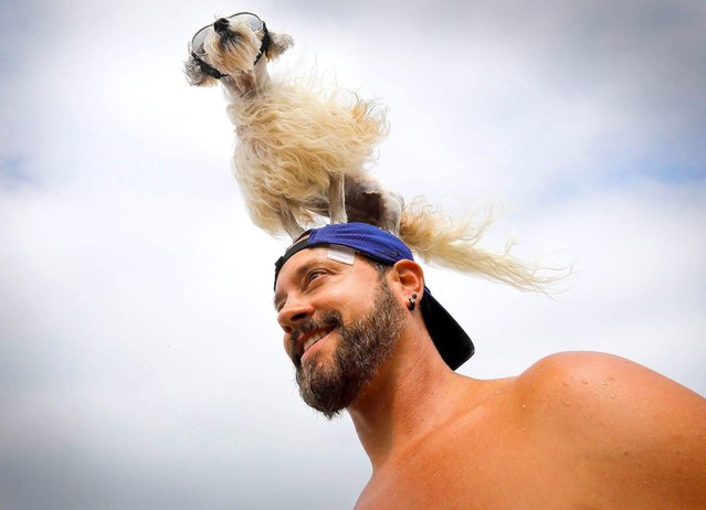 """""""Prince Dudeman"""" of Culver City sits on his owner, Ryan Thor's head during the 2018 Imperial Beach Surf Dog Competition next to the Imperial Beach Pier while spectators take pictures in San Diego, California on July 28, 2018. (Photo by Howard Lipin/San Diego Union-Tribune via ZUMA Press/Rex Features/Shutterstock)"""
