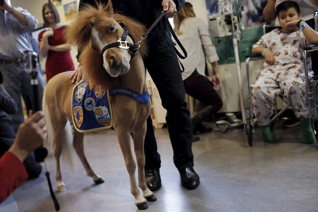 Honor, a miniature therapy horse from Gentle Carousel Miniature Therapy Horses, visits with patients at the Kravis Children's Hospital at Mount Sinai in the Manhattan borough of New York City, March 16, 2016. (Photo by Mike Segar/Reuters)