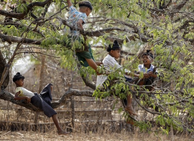 Boys sporting an ancient hairstyle known as Sanyitwine play on a tamarind tree at Sat Sat Yo village in Nyaung Oo township, near Myanmar's ancient city Bagan April 17, 2015. Sat Sat Yo village became a famous popular tourist site due to its children sporting the country's ancient hairstyle. (Photo by Soe Zeya Tun/Reuters)