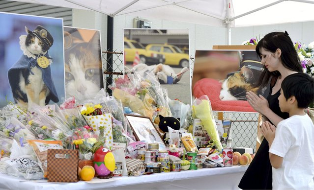 "People offer prayers in front of photos of Tama, the popular calico cat stationmaster, at Kishi Station on the Kishigawa Line of Wakayama Electric Railway Co. in Kinokawa, western Japan, in this photo taken by Kyodo June 28, 2015. The company gave Tama the title of ""honorary permanent stationmaster"" and held a funeral service for her contribution in saving the line from financial ruins. (Photo by Reuters/Kyodo News)"
