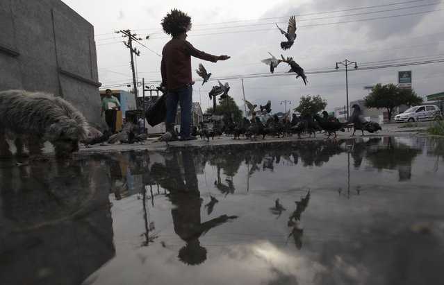 Jesus Moreno, 60, feeds pigeons in downtown Monterrey, Mexico July 7, 2015. (Photo by Daniel Becerril/Reuters)