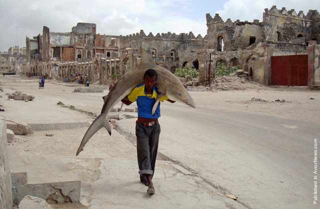 In this photo provided by World Press Photo, the 1st Prize Daily Life Single of the 2011 World Press Photo Contest by Omar Feisal, Somalia, Reuters, shows a man carrying a shark through the streets of Mogadishu, Somalia, Sept. 23, 2010
