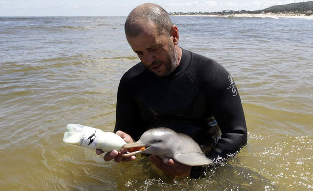 Rescued Baby Dolphin