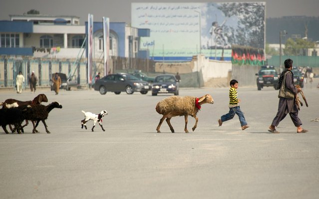 An Afghan shepherd (R) leads his flock across a street in the old city of Kabul. Poverty and an ongoing insurgency by the ousted Taliban still pose a threat to the stability of the country