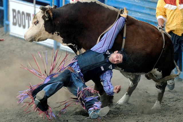 Elliot Jacoby of Fredricksburg, Texas, gets his hand tied up in the rope while being twisted around by a bull named Whirlpool at the PRCA Rodeo held at the Greeley Stampede Arena in Greeley, Colo,, Sunday, June 29, 2014. (Photo by Jim Rydbom/AP Photo/The Greeley Tribune)