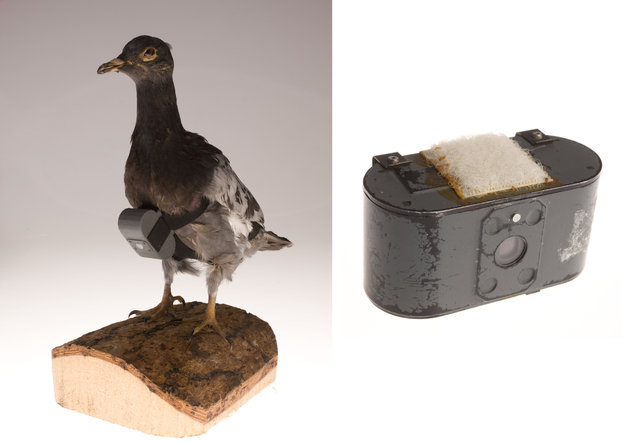 CIA's Office of Research and Development developed a camera small and light enough to be carried by a pigeon. It would be released, and on its return home the bird would fly over a target. Being a common species, its role as an intelligence collection platform was concealed in the activities of thousands of other birds. Pigeon imagery was taken within hundreds of feet of the target so it was much more detailed than other collection platforms. (Photo by Central Intelligence Agency)