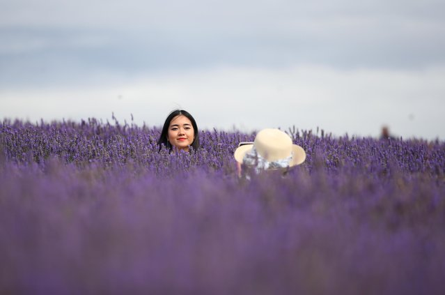 People take pictures in a lavender field at Hitchin Lavender farm in Ickleford, Britain, August 4, 2020. (Photo by Peter Cziborra/Reuters)
