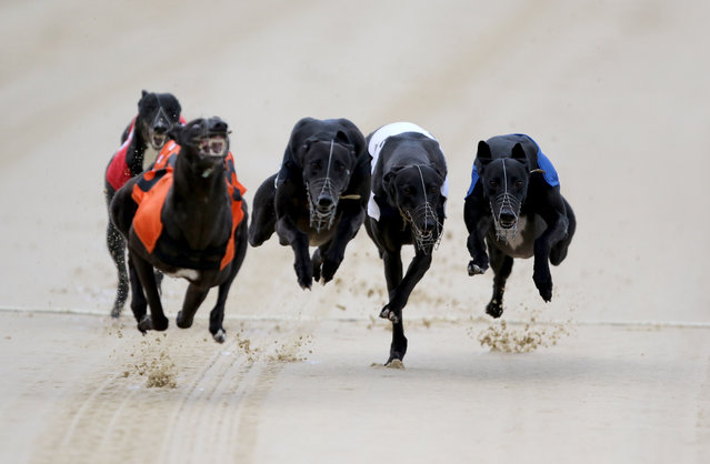 Tyrur Linda wins the Bags Track Championship in Sunderland, United Kingdom on October 13, 2015. (Photo by Richard Sellers/PA Wire via ZUMA Press)