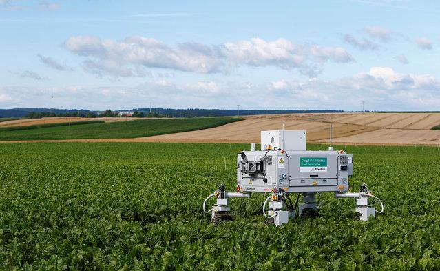 """A Bosch deep field robot called """"BoniRob"""" is pictured in a field in Renningen near Stuttgart, Germany July 29, 2016. (Photo by Michaela Rehle/Reuters)"""