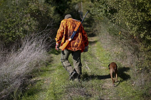 A hunter walks with his dog during a hunt in Castell'Azzara, Tuscany, central Italy, October 23, 2015. (Photo by Max Rossi/Reuters)
