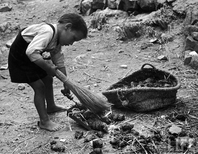 The youngest son in the Curiel family, 5-year-old Lutero, sweeps up manure from the street outside his home. It is carefully hoarded as fertilizer, will be used on the eight small fields the family owns or rents a few miles out of town. (Photo by W. Eugene Smith/Time & Life Pictures)