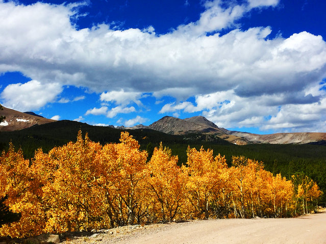 The aspen leaves are bright yellow in the Colorado high country near Ward, Colorado, Friday, September 23, 2016. This weekend is considered peak viewing season for the fall foliage. (Photo by Jack Dempsey/AP Photo)