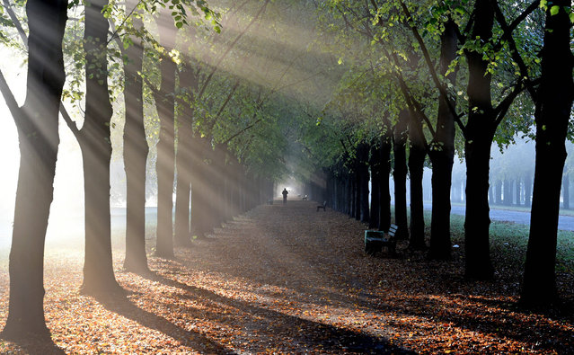 The morning sun breaks through the trees of the Georgengarten park to illuminate the early morning mist in Hanover, Germany, 18 October 2016. (Photo by Holger Hollemann/DPA)