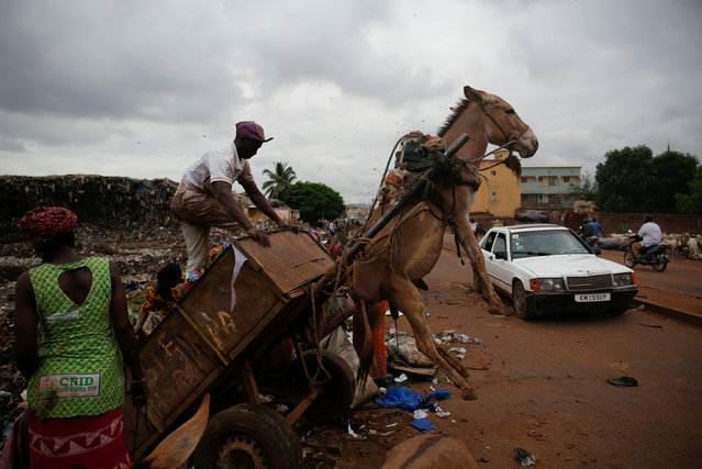 "A waste picker unloads garbage at a waste transfer station in Bamako, Mali, August 19, 2018. In the Malian capital of Bamako, donkey carts driven by young men like 19-year-old Arouna Diabate play a vital role battling the fast-growing city's waste problem. Every morning before dawn, Diabate hitches his donkey to a cart and sets off on his rounds, going door-to-door to collect household garbage which he delivers to a local waste transfer station for a monthly salary of around $35. ""I won't be picking up trash with a donkey cart for the rest of my life, but for now people appreciate us because we help clean up the homes of Bamako"", Diabate said. (Photo by Luc Gnago/Reuters)"