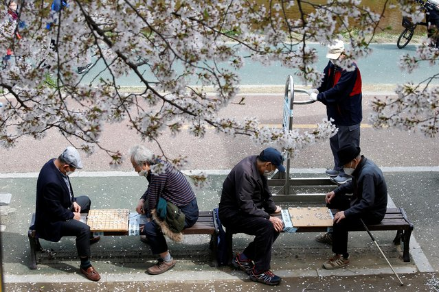 People play Chinese chess at a park under a cherry blossom trees near Bulgwangcheon Stream, in Seoul, South Korea, April 1, 2021. (Photo by Heo Ran/Reuters)
