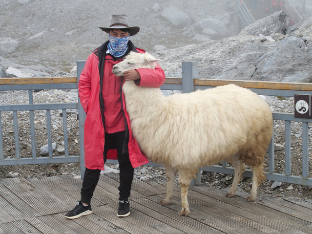 This September 21, 2018 photo shows a tourist posing with a yak atop the Baishui Glacier No.1 on the Jade Dragon Snow Mountain in the southern province of Yunnan in China. About 2.6 million visitors come every year to see the glacier which scientists say is one of the fastest melting glaciers in the world due to climate change and its relative proximity to the Equator. (Photo by Sam McNeil/AP Photo)