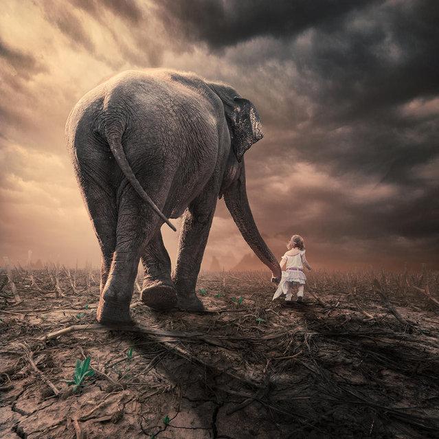 """The little companion"". (Photo by Ionut Caras)"