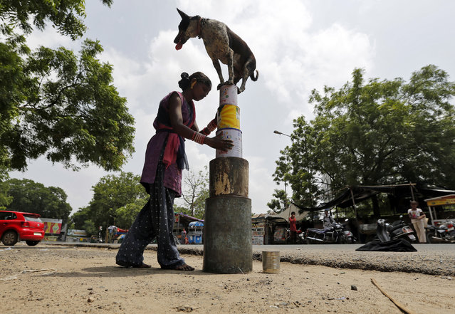 Savita, a street performer, helps her dog to balance on empty tin containers as they perform at a roadside in Ahmedabad September 7, 2014. (Photo by Amit Dave/Reuters)