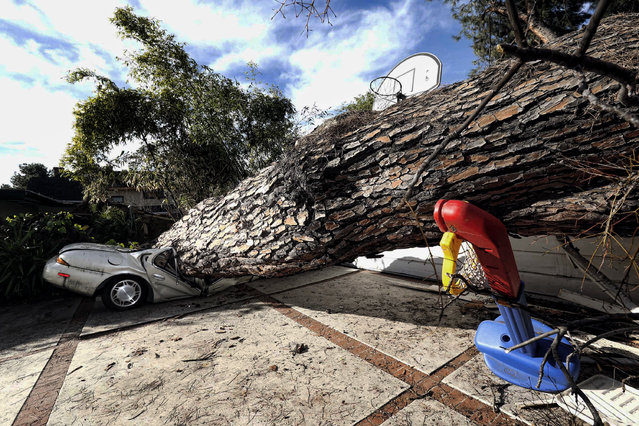 A fallen tree crushed a car at a residence in Pasadena, Calif. on Wednesday, February 15, 2017. Authorities say nobody was hurt when the massive tree uprooted and pancaked the car, narrowly missing the home. Police say the 125-foot pine, estimated to be more than 100 years old, came crashing down Tuesday. (Photo by Nick Ut/AP Photo)