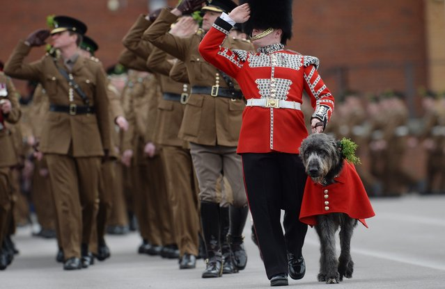 Members of the Irish Guards Regiment salute the Duke and Duchess of Cambridge (unseen) as they march with their Irish wolfhound during a St.Patrick's Day Parade at Mons Barracks in Aldershot, London, Britain, 17 March 2014. Saint Patrick's Day is a religious holiday celebrated internationally on 17 March. It is named after Saint Patrick the most commonly recognised of the patron saints of Ireland. (Photo by Andy Rain/EPA)