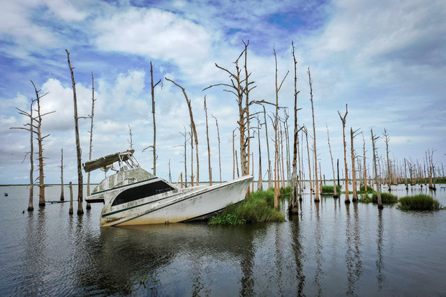 An abandoned boat sits in the water amid dead cypress trees in coastal waters and marsh August 26, 2019 in Venice, Louisiana. Many oak trees and cypress trees throughout Louisiana's coastal marshes have died due to a combination of the saltwater intrusion and subsidence. According to researchers at the National Oceanic and Atmospheric Administration (NOAA), Louisiana's combination of rising waters and sinking land give it one of the highest rates of relative sea level rise on the planet. Since the 1930s, Louisiana has lost over 2,000 square miles of land and wetlands, an area roughly the size of Delaware. In the past 30 years, as subsidence continues and the effects of climate change increase, Louisiana has been losing its coastal landscape at the rate of almost a football fields worth of land every hour. (Photo by Drew Angerer/Getty Images)