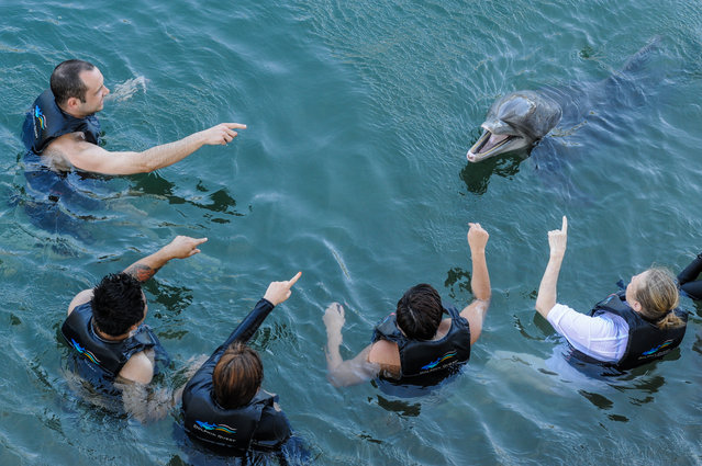 Bottle-nosed dolphin, USA, 2012. (Photo by Jo-Anne McArthur/Born Free Foundation/The Guardian)