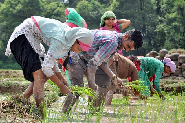 Indian farmers plant paddy saplings in a field at Samirpur village in Kangra, India, 27 June 2016. Paddy is the main summer-sown crop in India, one of the world's biggest producer of rice. (Photo by Sanjay Baid/EPA)