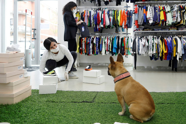 An employee of a children's clothes store interacts with a dog after the shop's reopening, during the outbreak of the coronavirus disease (COVID-19) in Rome, Italy on April 14, 2020. (Photo by Yara Nardi/Reuters)