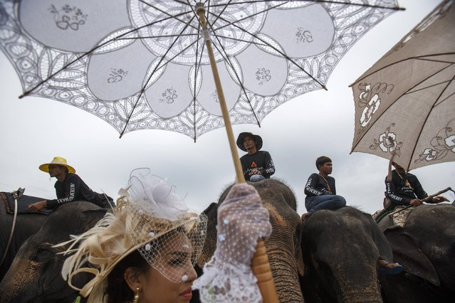 A woman holds a parasol as she stands next to elephants during a match at the 2014 King's Cup Elephant Polo Tournament in Samut Prakan province, on the outskirts of Bangkok August 30, 2014. A total of 16 international teams and 51 Thai elephants are participating in the tournament that runs from August 28-31. (Photo by Athit Perawongmetha/Reuters)