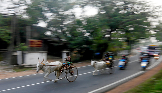 Competitors take part in a bullock cart race during traditional festival games ahead of celebrations for the Sinhalese and Tamil New Year, in Homagama, Sri Lanka April 1, 2018. (Photo by Dinuka Liyanawatte/Reuters)