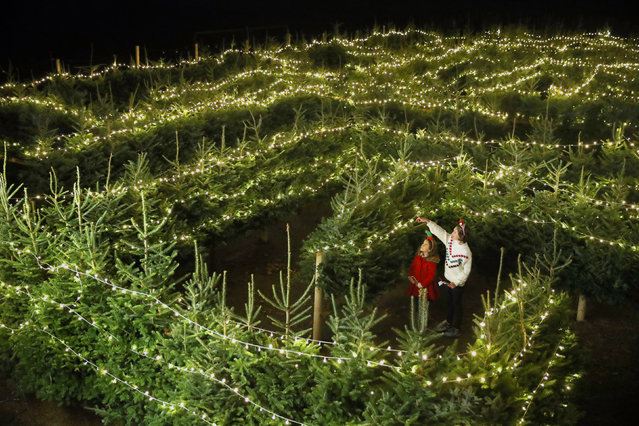 Jasmine Muir(10) and her sister Lottie(8) explore the Christmas tree maze at the Blair Drummond Smiddy Farm Shop near Stirling, UK on November 25, 2020, ahead of the opening of their Christmas festivities this weekend. (Photo by Andrew Milligan/PA Images via Getty Images)