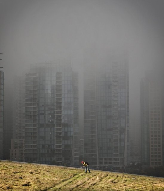 Morning fog covers downtown as a landscaper rakes grass on top of Vancouver Convention Centre's living roof in Vancouver, on October 17, 2013. (Photo by Andy Clark/Reuters)