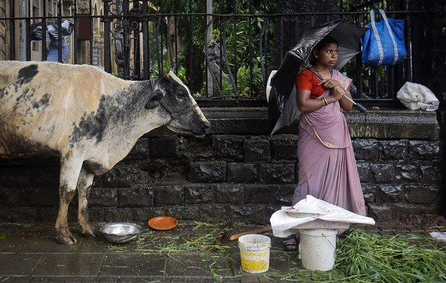 A streetside vendor stands on the pavement next to her cow as it rains in Mumbai, in this July 10, 2013 file photo. Hindu nationalists in India have stepped up attacks on the country's beef industry, seizing trucks with cattle bound for abattoirs and blockading meat processing plants in a bid to halt the trade in the world's second-biggest exporter. (Photo by Danish Siddiqui/Reuters)