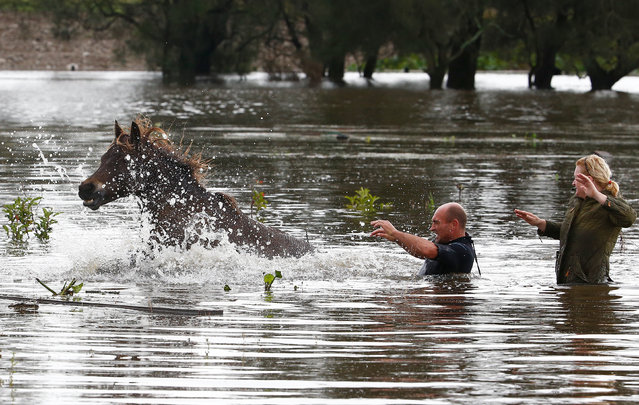 A man and woman try to help a horse stranded in barbed wire in flood waters on April 22, 2015 near Dungog, Australia. Three people have died and more than 200,000 are still without power as cyclonic winds and rains continue to lash the Sydney, Hunter Valley and Central Coast regions of New South Wales. (Photo by Daniel Munoz/Getty Images)