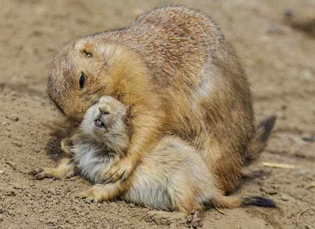 Animals at the zoo Hagenbeck in Hamburg, Germany, April 29th, 2015. (Photo by Action Press/ZUMAPress)