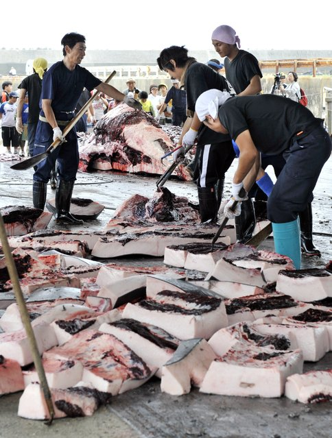 This file photo taken on June 25, 2008 shows Japanese fishermen cutting up blocks of meat from a 10m-long bottlenose whale, slaughtered at the port of Wada in Minami-Boso, Chiba prefecture, east of Tokyo. (Photo by Yoshikazu Tsuno/AFP Photo)